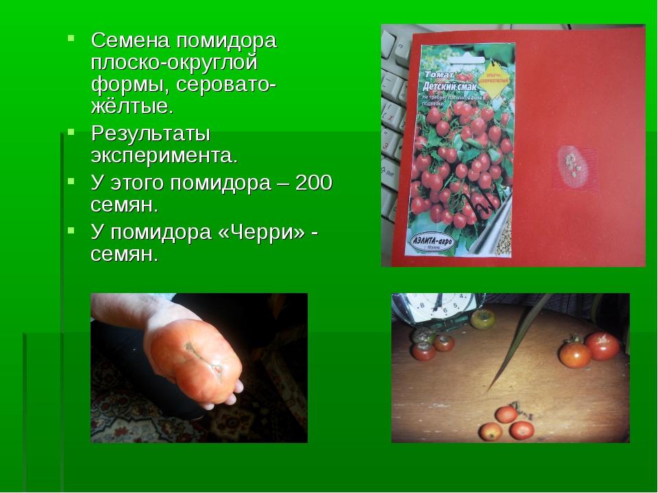 Семена помидора плоско-округлой формы, серовато-жёлтые. Результаты эксперимен...