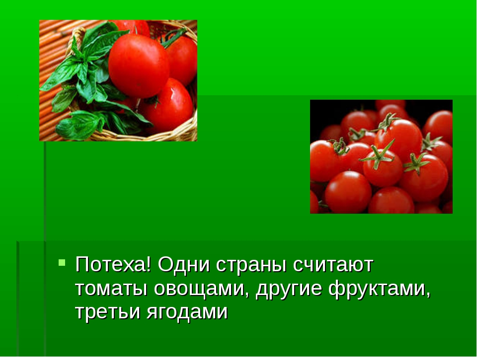 Потеха! Одни страны считают томаты овощами, другие фруктами, третьи ягодами
