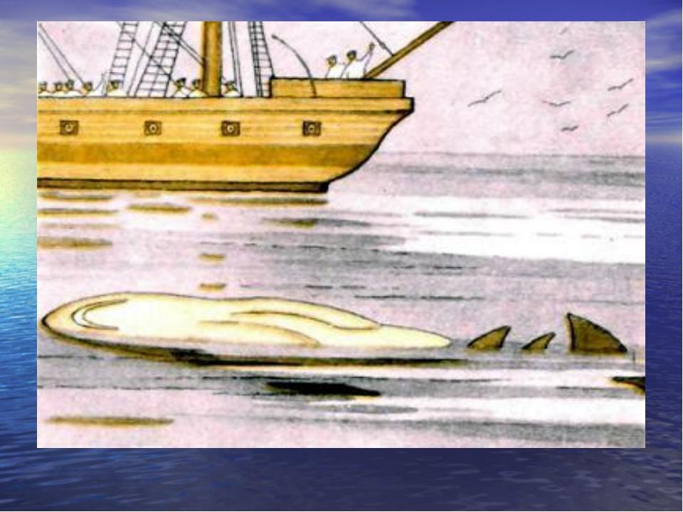Акула раскраска толстого