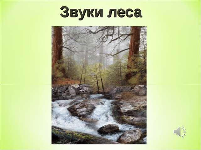 Звуки леса