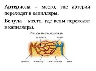 Артериола – место, где артерии переходят в капилляры. Венула – место, где вен