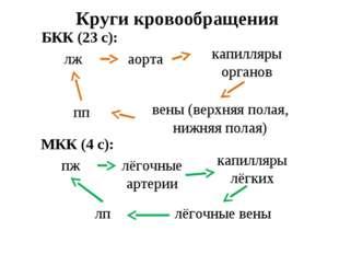 Круги кровообращения БКК (23 с): лж аорта капилляры органов вены (верхняя пол