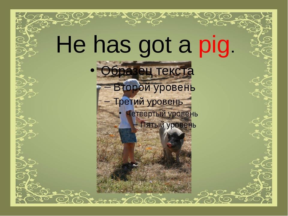 He has got a pig.