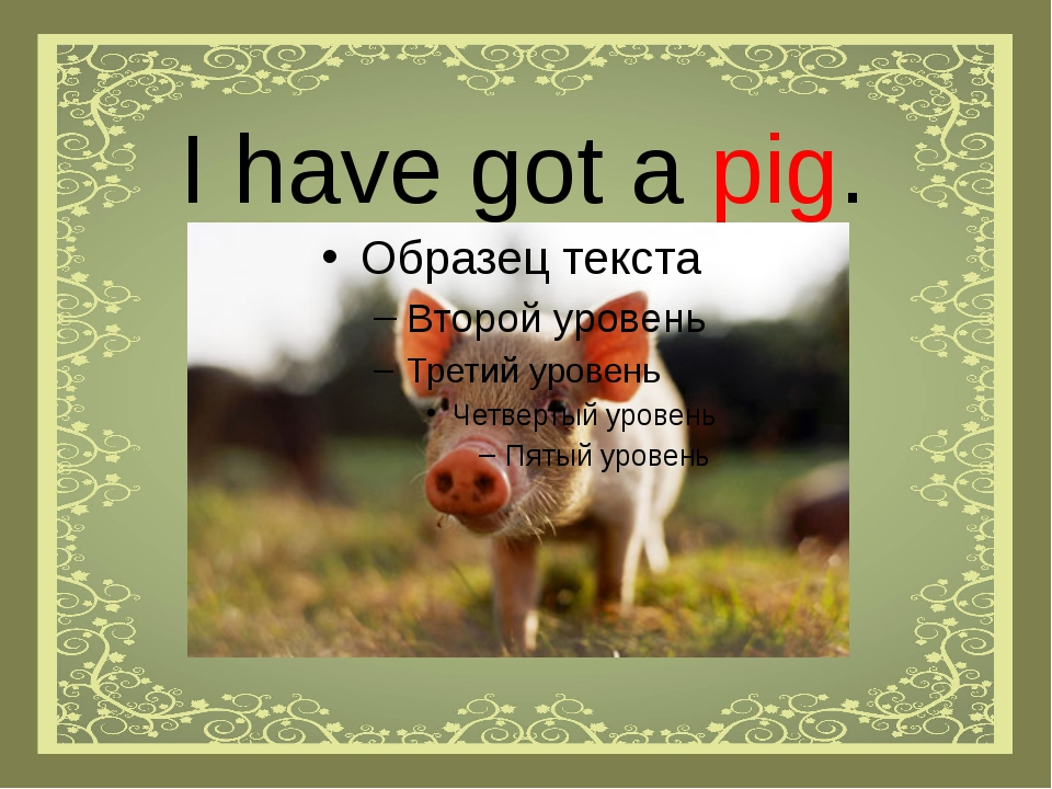 I have got a pig.