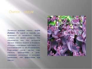 Очиток - седум Латинское название очитка -седум (Sedum). По одной из версий,