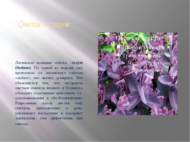 Очиток - седум Латинское название очитка -седум (Sedum). По одной из версий,...