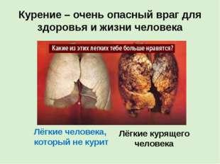 Курение – очень опасный враг для здоровья и жизни человека Лёгкие человека, к
