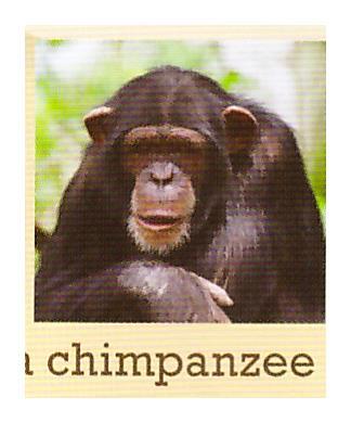 C:\Users\админ\Desktop\photos of animals\1ч.jpeg