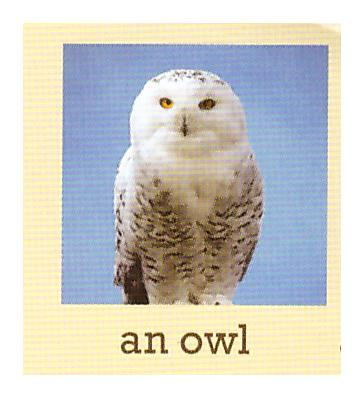 C:\Users\админ\Desktop\photos of animals\1р.jpeg