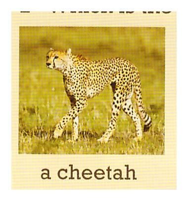 C:\Users\админ\Desktop\photos of animals\1и.jpeg