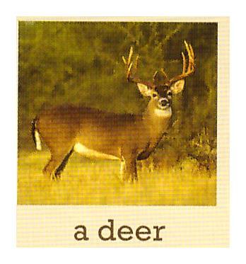 C:\Users\админ\Desktop\photos of animals\1к.jpeg