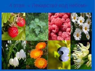 4 этап: « Лекарство под небом»