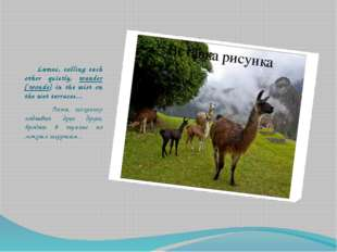 Lamas, calling each other quietly, wander [`wondә] in the mist on the wet te