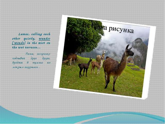 Lamas, calling each other quietly, wander [`wondә] in the mist on the wet te...