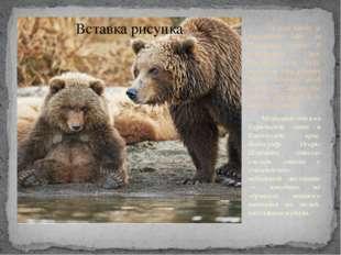 A bear family at Kurilskoye lake in Kamchatka region. A photographer Igor Sh