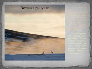 Geese in the Arctic. A photographer Sergey Gorshkov slept during the day, an