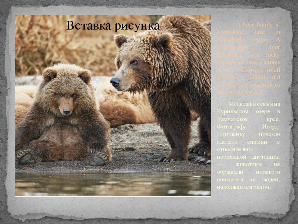 A bear family at Kurilskoye lake in Kamchatka region. A photographer Igor Sh...