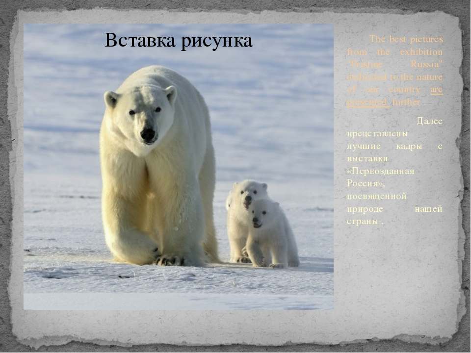 "The best pictures from the exhibition ""Pristine Russia"" dedicated to the nat..."