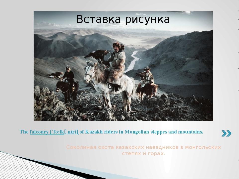 Соколиная охота казахских наездников в монгольских степях и горах. The falcon...