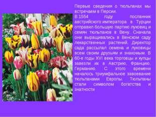 Первые сведения о тюльпанах мы встречаем вПерсии. В1554 году посланник авс