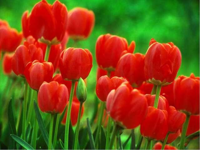 Тюльпа́нмноголетнее луковичное растение. Название произошло от персидского...