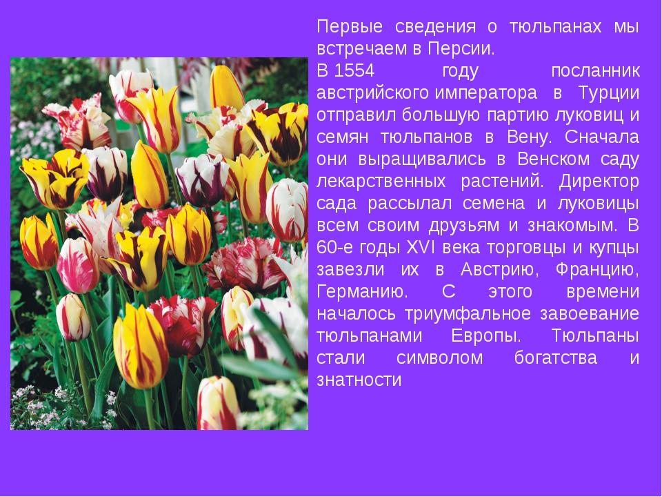 Первые сведения о тюльпанах мы встречаем вПерсии. В1554 году посланник авс...