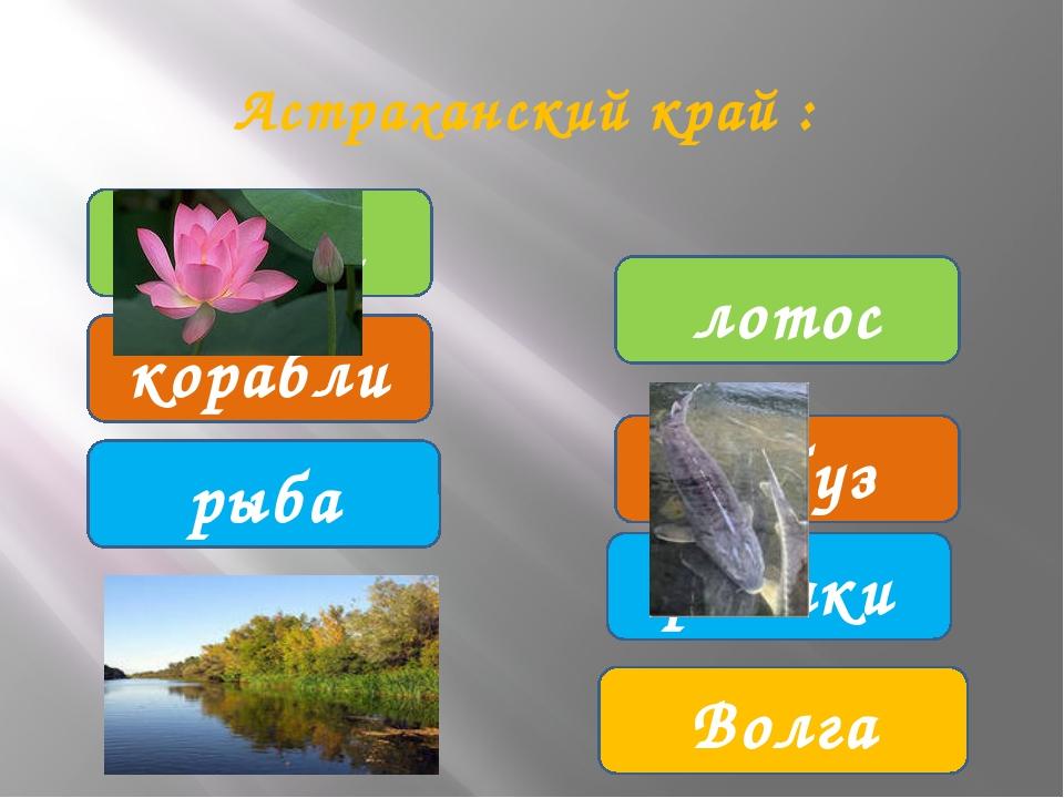лебеди корабли рыбаки лотос арбуз рыба Волга Астраханский край :