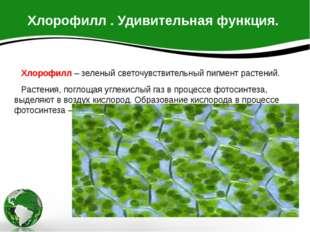 Хлорофилл . Удивительная функция. Хлорофилл – зеленый светочувствительный пиг