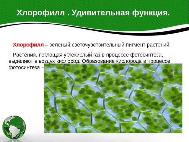 Хлорофилл . Удивительная функция. Хлорофилл – зеленый светочувствительный пиг...