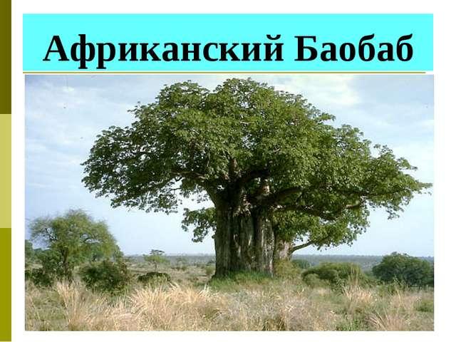 Африканский Баобаб