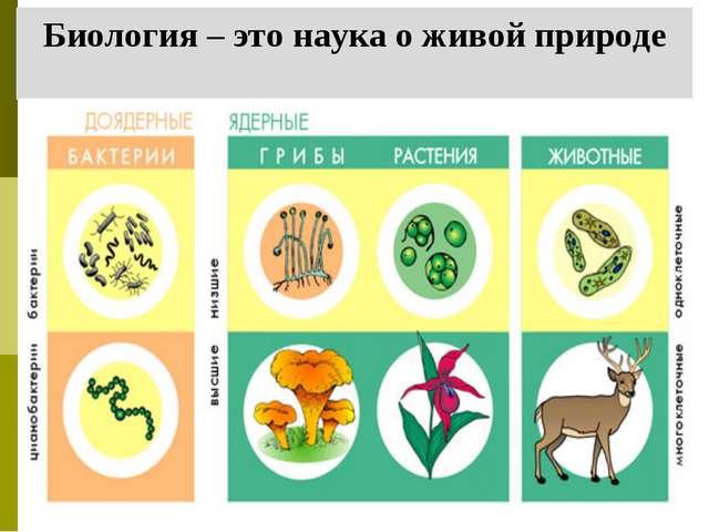 Биология – это наука о живой природе
