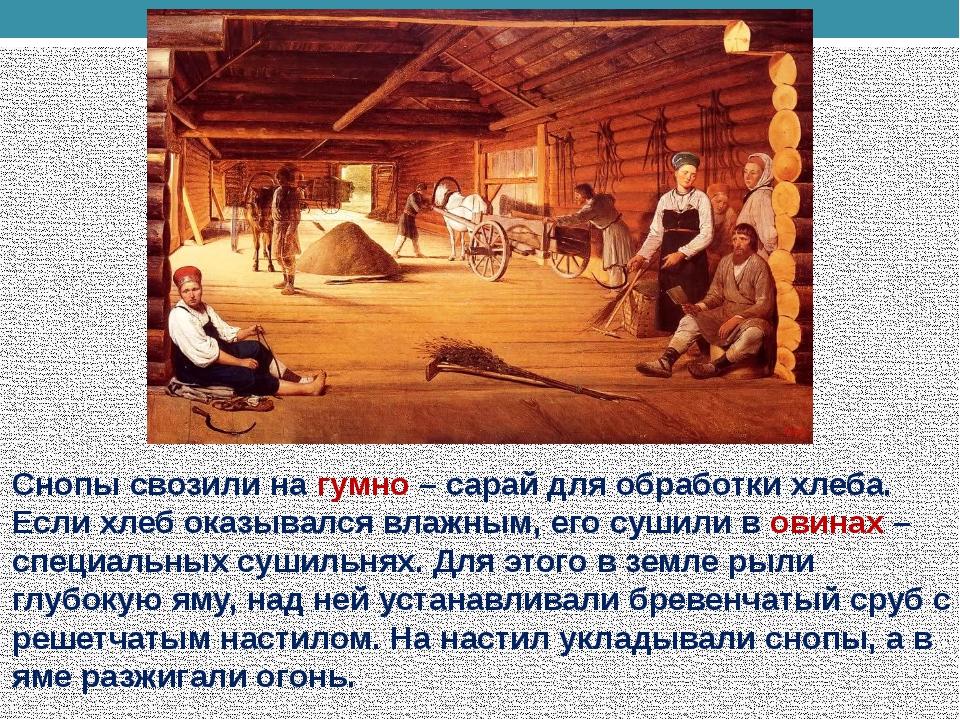 Снопы свозили на гумно – сарай для обработки хлеба. Если хлеб оказывался влаж...