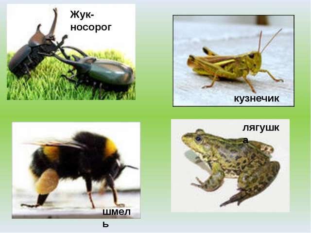 Жук-носорог кузнечик лягушка шмель