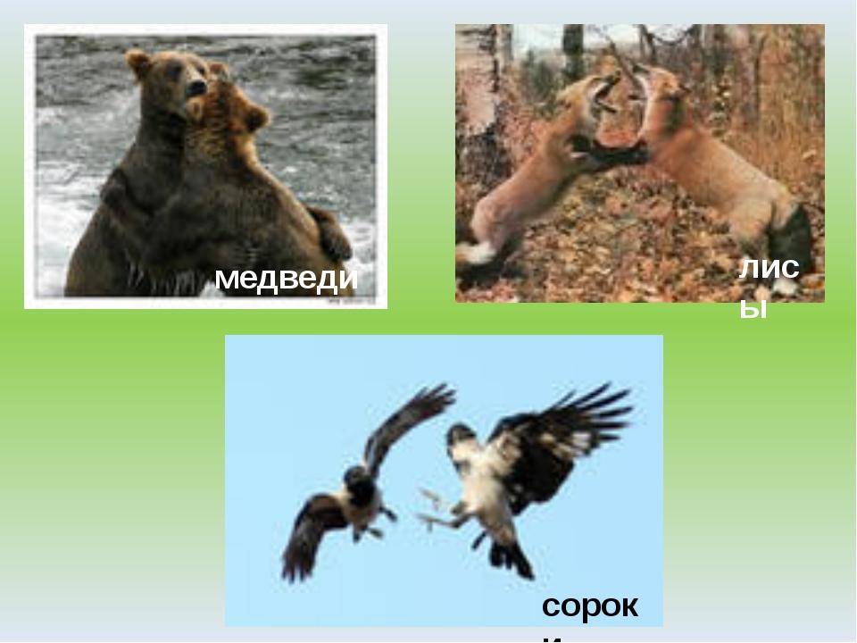 медведи лисы сороки