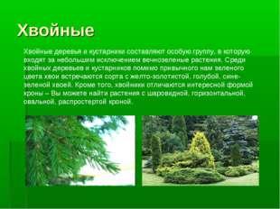 Хвойные Хвойные деревья и кустарники составляют особую группу, в которую вход