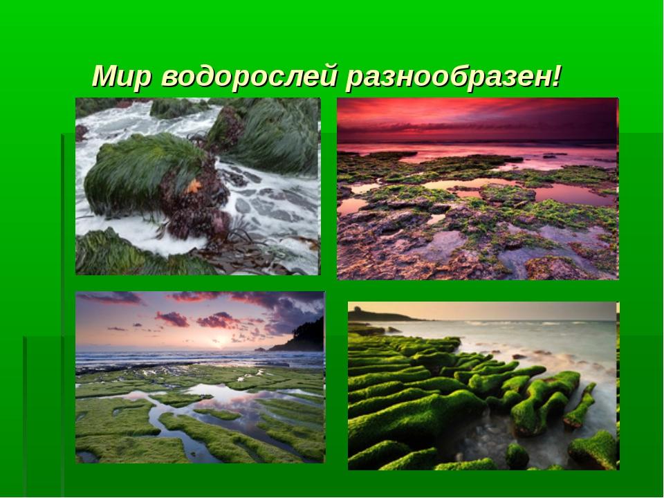 Мир водорослей разнообразен!