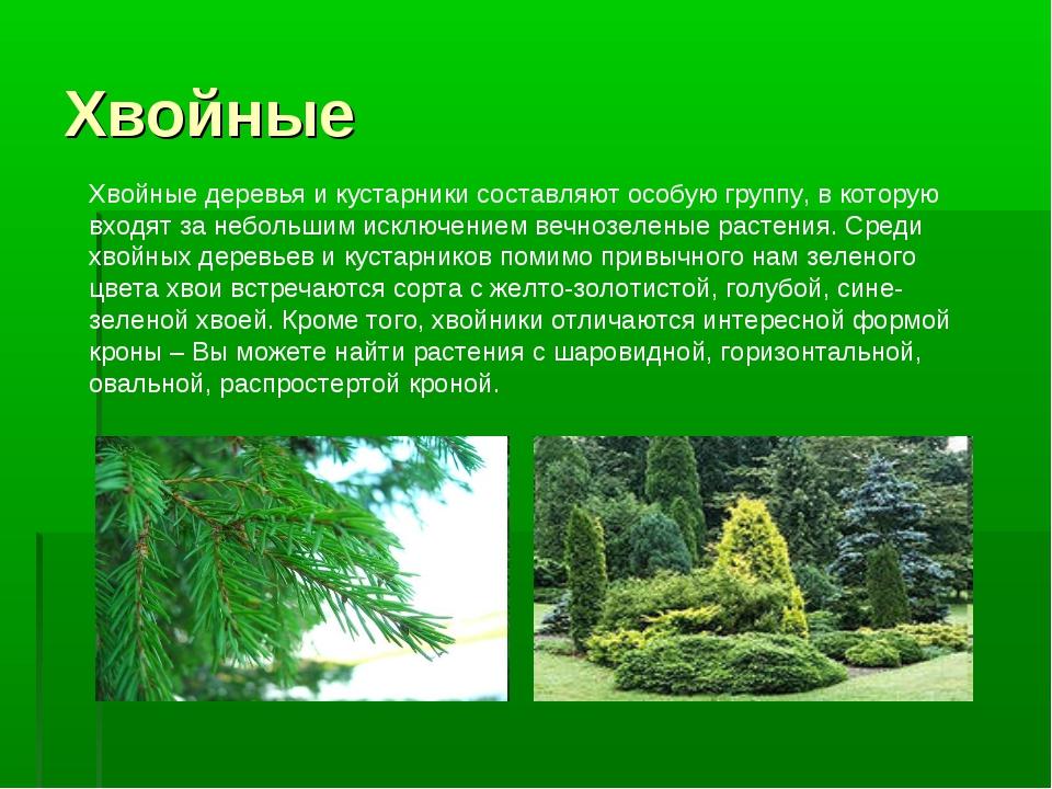 Хвойные Хвойные деревья и кустарники составляют особую группу, в которую вход...