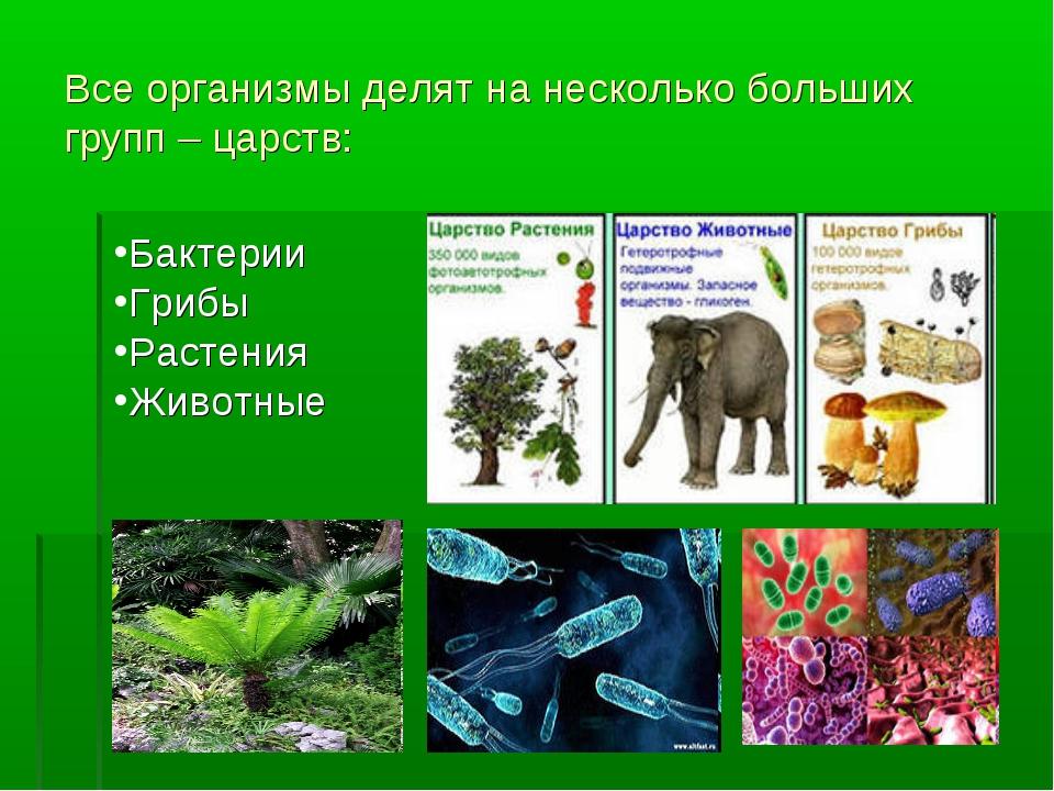 Все организмы делят на несколько больших групп – царств: Бактерии Грибы Расте...