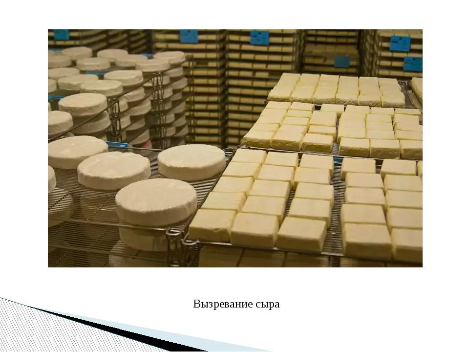 Вызревание сыра