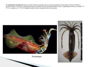 Из головоногих моллюсков наиболее распространены кальмары, запасы которых пре