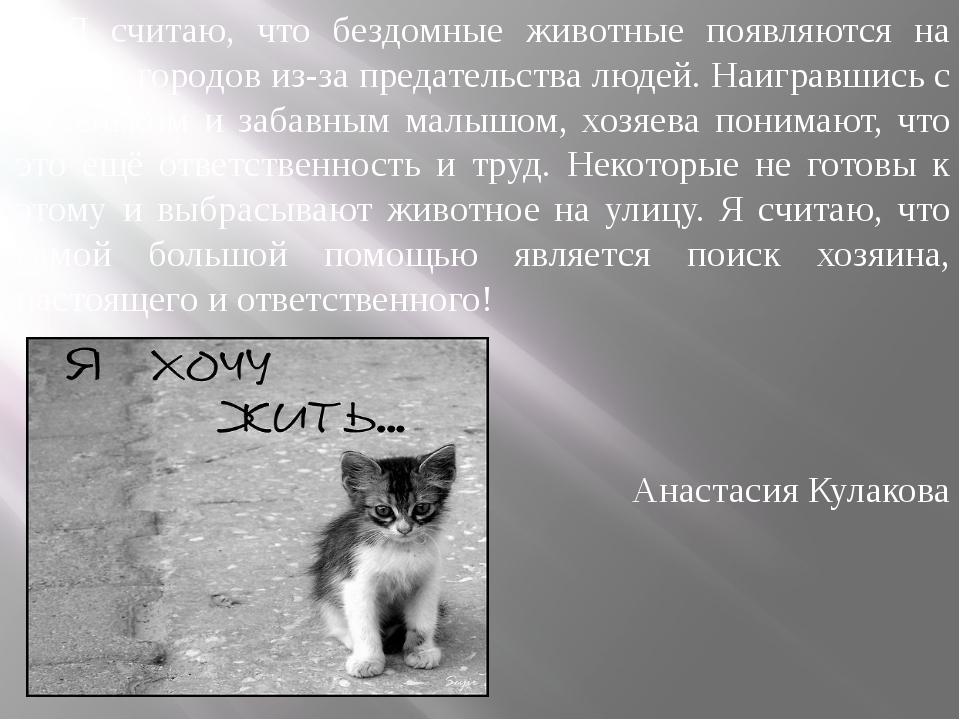 Я считаю, что бездомные животные появляются на улицах городов из-за предатель...