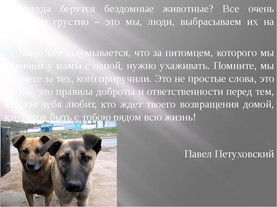 Откуда берутся бездомные животные? Все очень просто и грустно – это мы, люди,...