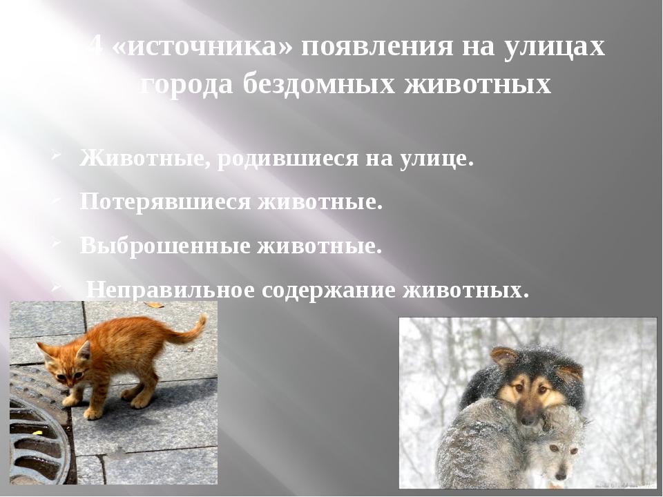4 «источника» появления на улицах города бездомных животных Животные, родивши...