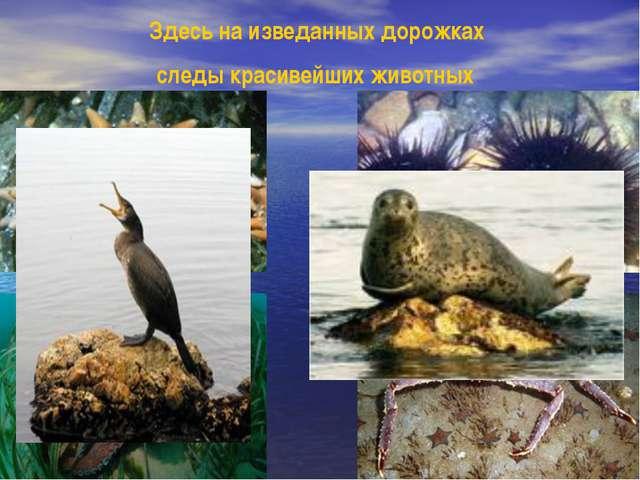 Остров Петрова /Реликтовая тисовая роща/, Лазовский заповедник