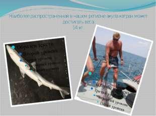 Наиболее распространенная в нашем регионе акула катран может достигать веса 1