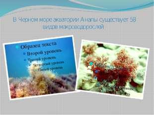 В Черном море акватории Анапы существует 58 видов макроводорослей.