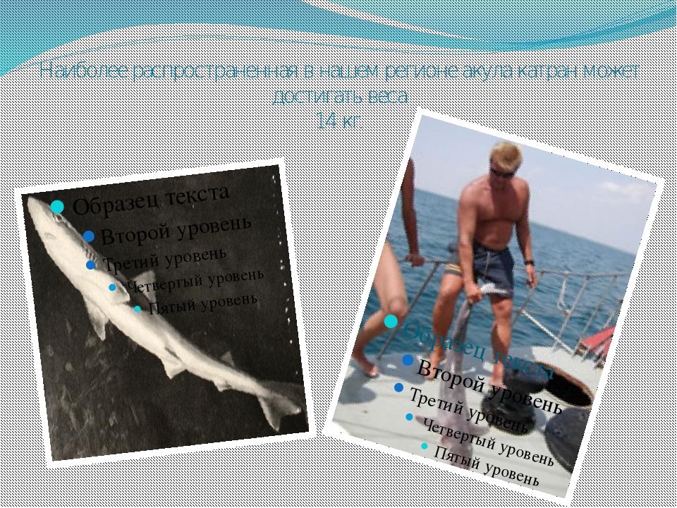 Наиболее распространенная в нашем регионе акула катран может достигать веса 1...