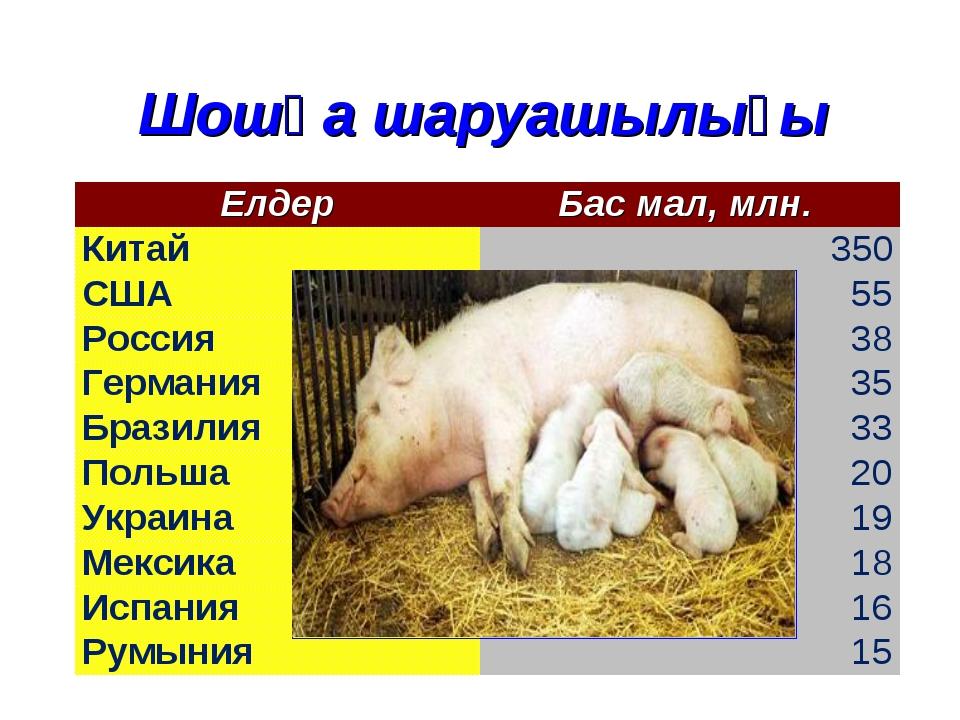 Шошқа шаруашылығы ЕлдерБас мал, млн. Китай 350 США55 Россия 38 Германия3...