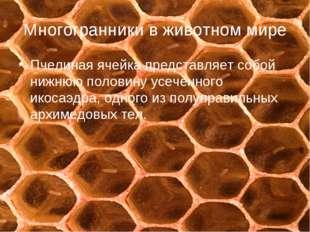 Многогранники в животном мире Пчелиная ячейка представляет собой нижнюю полов