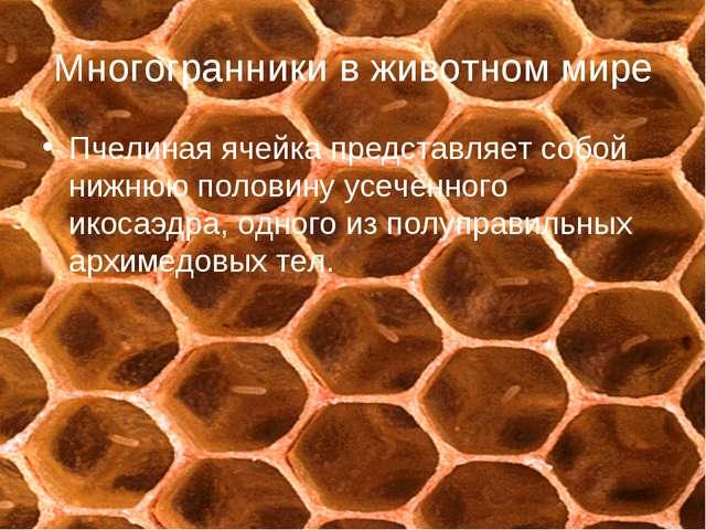 Многогранники в животном мире Пчелиная ячейка представляет собой нижнюю полов...